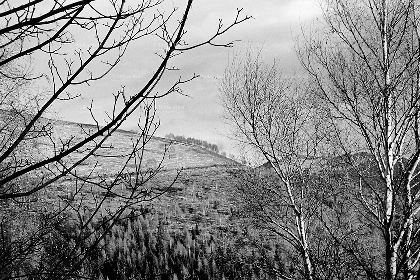 Switzerland. Canton Ticino. Monte Bar. Hiking and moutain wanderering. Trees. 15.12.12 © 2012 Didier Ruef