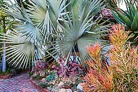 Bismarckia nobilis (Bismarck Palm Tree) on left, Jim Bishop and Scott Borden garden
