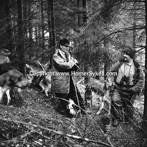 The Blencathra Foxhounds. A fox has gone to earth, Barry Todhunter blocks the earth before calling off the hounds prior to the arrival of the terrier men. During the 2003-4 season 100 foxes were accounted for. Near Braithwaite, Cumbria..