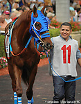 HALLANDALE BEACH, FL - APRIL 01: Gunnevera, trained by Antonio Sano, in the walking ring for the 66th running of the $1 million Xpressbet Florida Derby at Gulfstream Park on April 01, 2017 in Hallandale Beach, Florida. (Photo by Carson Dennis/Eclipse Sportswire/Getty Images)