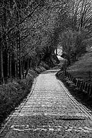 Ronde van Vlaanderen 2020 (cancelled) BEL