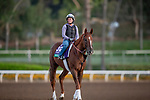 OCT 25: Breeders' Cup Turf entrant United, trained by Richard E. Mandella, gallops at Santa Anita Park in Arcadia, California on Oct 25, 2019. Evers/Eclipse Sportswire/Breeders' Cup