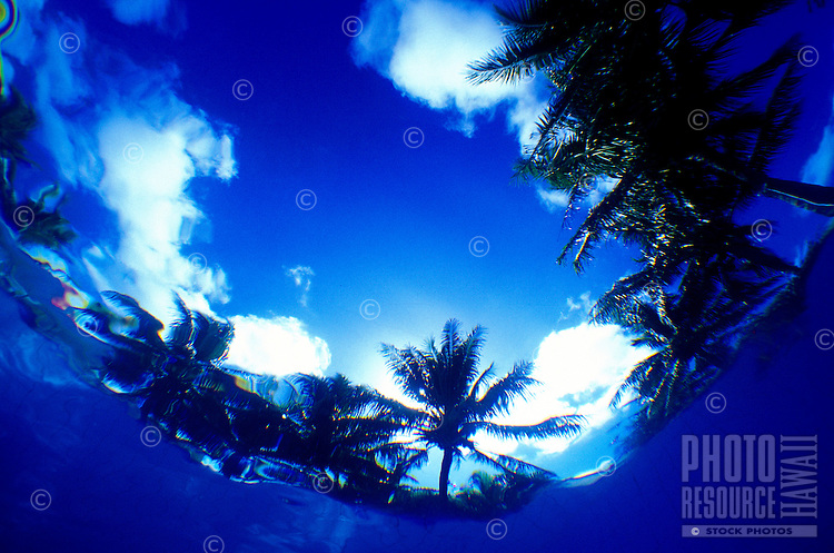 Clean blue water and palm trees as viewed from underwater.