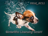REALISTIC ANIMALS, REALISTISCHE TIERE, ANIMALES REALISTICOS, dogs, paintings+++++SethC_Atticus_IMG_0681v3nolineswork2,USLGSC11,#A#, EVERYDAY ,underwater dogs,photos,fotos ,Seth