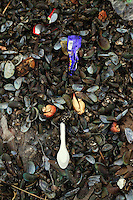 Trash mixed with mussel shells in the port area of Jakarta.<br /> <br /> To license this image, please contact the National Geographic Creative Collection:<br /> <br /> Image ID:  1588016<br />  <br /> Email: natgeocreative@ngs.org<br /> <br /> Telephone: 202 857 7537 / Toll Free 800 434 2244<br /> <br /> National Geographic Creative<br /> 1145 17th St NW, Washington DC 20036