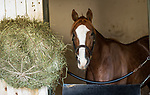 ARCADIA, CA - OCTOBER 22: Breeders' Cup Juvenile contender Free Drop Billy at Santa Anita Park on October 22, 2017 in Arcadia, California. (Photo by Alex Evers/Eclipse Sportswire/Getty Images)