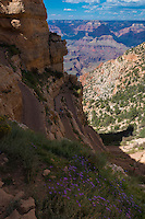 South Rim Trail In Grand Canyon