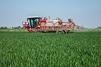 Applying fungicide to outer 12m of winter wheat hedland - Lincolnshire, June