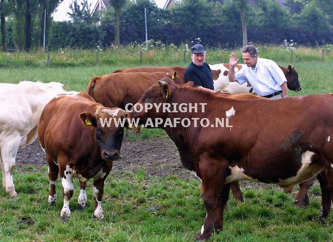 dodewaard 090701 slagewr pietman(r) zoekt een dikbil stier uit bij boerr van kleef (l)<br />foto frans ypma APA-foto