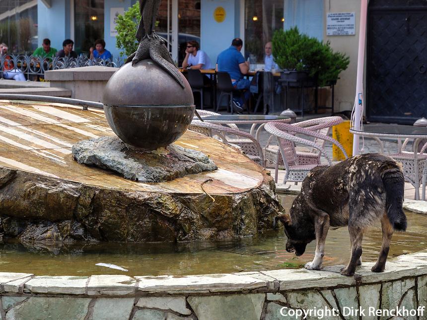 Hund im Bäderviertel Abanotubani, Tiflis – Tbilissi, Georgien, Europa<br /> Dog in thermal quarter Abanotuban, Tbilisi, Georgia, Europe