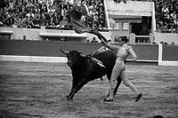 Corrida aux Arènes du Soleil d'Or (quartier des Arènes). 2 octobre 1966. Scène de tauromachie. Au 1er plan Fernando Tortosa <br /> <br /> PHOTO:  Fonds André Cros,