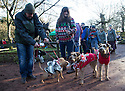 """18/12/16<br /> <br /> L/R: Puggles, Barkley and Teddy with owners Sue and Mark Haywood and Irish Terriers, Willow and Archie with owner Sonya Bradley.<br /> <br /> Close to 800 dogs, many of them dressed up in festive garb, have visited their very own Santa Paws in a special dog-only Christmas grotto held in Sherwood Forest in Nottinghamshire this weekend.<br /> The two-day event, which was organised by park rangers working for Nottinghamshire County Council, has been running for three years.<br /> Ranger Graeme Turner, who originally came up with the idea for a doggy-themed Santa's Grotto said this year has been the best so far.<br /> """"The queue is huge, it snakes back all the way round the visitor's centre,"""" he said. """"All the dogs are being very well behaved, I guess they don't want to get onto Santa Paw's naughty list this close to Christmas!""""<br /> All canine visitors to the grotto got a special doggy bag full of treats and money raised from the event will go to Jerry Green Dog Rescue charity.<br /> <br /> All Rights Reserved F Stop Press Ltd. (0)1773 550665   www.fstoppress.com"""