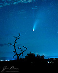 NEOWISE Goes Gothic.  On this evening (July 21, 2020), our comet pal felt spooky and wanted to pose alongside a haunted house.  The problem is that we don't have any of those around here, so he had to settle for a skeletal pinyon pine tree instead.  He picked this one because lights of the city of Sedona were visible in the background and were illuminating the lingering monsoon clouds.<br /> <br /> Tech info: Nikon D850 camera with Nikon 50mm f1.8 lens, 4 sec. at f2.8, ISO 4000.<br /> <br /> Image ©2020 James D. Peterson