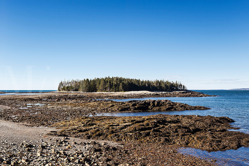 Pond Island, Acadia National Park, Winter Harbor, Schoodic Peninsula, Maine, USA