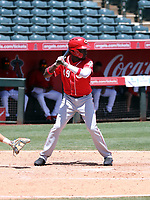 Danielito Remy - Cincinnati Reds 2019 extended spring training (Bill Mitchell)