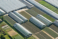 Glashaus und Gartenbau in den Vier und Marschlanden: EUROPA, DEUTSCHLAND, HAMBURG, 11.08.2003: Glashaus und Gartenbau in den Vier und Marschlanden