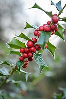 Phoenix Perennials - December