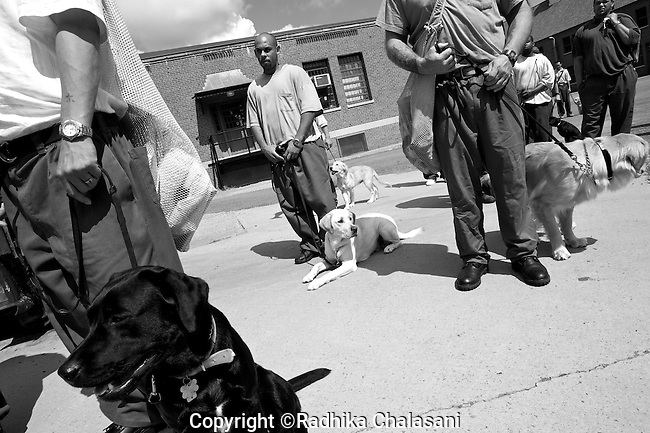 BEACON, NEW YORK:  Prisoners take their puppies to a courtyard for training at Fishkill Correctional Facility. The Puppies Behind Bar (PPB) program works with prison inmates in New York, New Jersey, and Connecticut to train service dogs, including ones who help injured soldiers and those suffering from post-traumatic stress. Fishkill Correctional Facility is a medium security prison in New York with 22 men in the puppy program.