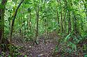 Lowland tropical rainforest, Osa Peninsula, Costa Rica. May.