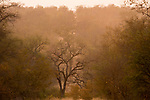 Bushveld, Greater Makalali Private Game Reserve, South Africa