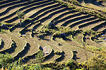 Myanmar, (Burma), Shan State, Kengtung: Terraced rice fields in Shan hills below Loimwe | Myanmar (Birma), Shan Staat, Kengtung: Reisterrassen im Shan-Hochland bei Loimwe