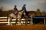 October 31, 2020: County Final, trained by trainer Steven M. Asmussen, exercises in preparation for the Breeders' Cup Juvenile Turf Sprint at Keeneland Racetrack in Lexington, Kentucky on October 31, 2020. Alex Evers/Eclipse Sportswire/Breeders Cup