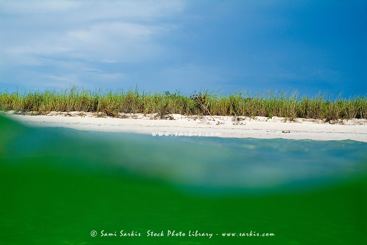 Bright green water and white sand beach with wild grasses, Cayo Jutias, Cuba.