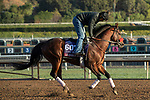 ARCADIA, CA  OCTOBER 30: Breeders' Cup Turf Sprint entrant Legends of War, trained by Doug F. O'Neill,  exercises in preparation for the Breeders' Cup World Championships at Santa Anita Park in Arcadia, California on October 30, 2019.  (Photo by Casey Phillips/Eclipse Sportswire/CSM)