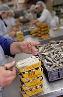 """Europe/France/Bretagne/56/Morbihan/Quiberon: Conserverie de sardines """"la Quiberonnaise"""" - Dans les ateliers"""