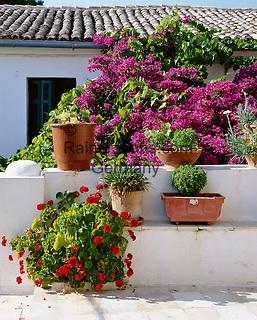 Greece, Corfu: Flowers & Pots | Griechenland, Korfu: bluehende Bougainvillea and Topfblumen