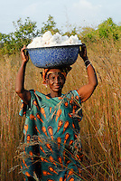 MALI , Bougouni, Fair trade und Biobaumwolle Projekt , Frauen bei Baumwollernte - MALI , Bougouni , women harvest fair trade organic cotton