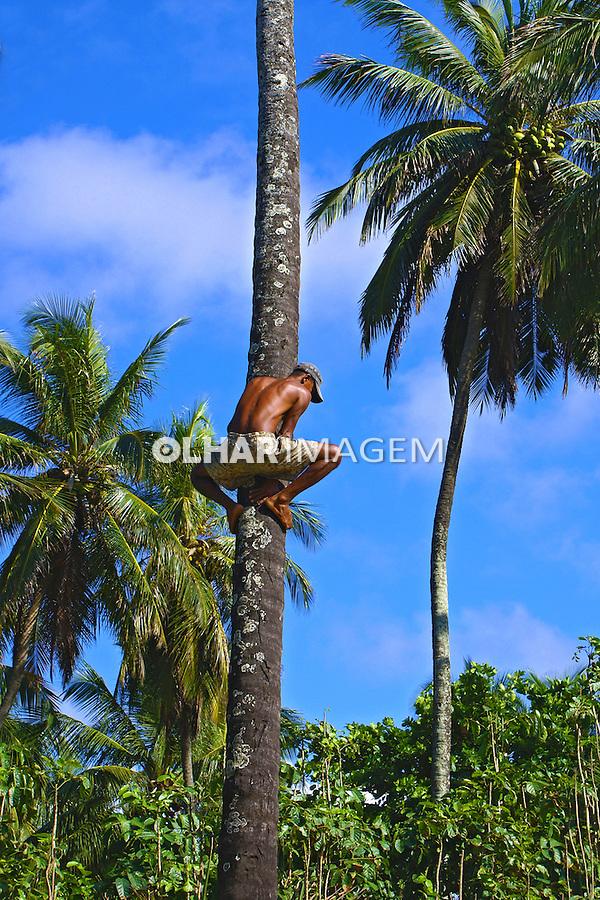 Catador de coco subindo em coqueiro. Bahia. 2010. Foto de Marcia Rebello.