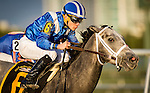 HALLANDALE FL - FEBRUARY 27: Mohaymen #6, ridden by Junior Alvarado drives off the turn en route to winning the Xpressbet.com Fountain of Youth Stakes at Gulfstream Park on February 27, 2016 in Hallandale, Florida.(Photo by Alex Evers/Eclipse Sportswire/Getty Images)