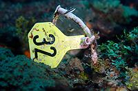 Yellow mark to check the coral growing. Gulf of Mexico, site of Stetson Bank, off Texas, United States, USA