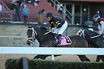 March 6, 2021: Blackberry Wine (8) with jockey David Cabrera aboard winning the eighth race at Oaklawn Racing Casino Resort in Hot Springs, Arkansas. ©Justin Manning/Eclipse Sportswire/CSM