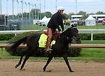 April 26, 2015 Kentucky Derby and Oaks workouts, Churchill Downs.  Ocho Ocho Ocho, owner DP Racing, trainer Jim Cassidy.  By Street Sense x Winner (Horse Chestnut) ©Mary M. Meek/ESW/CSM