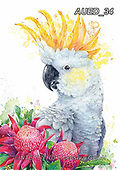 Carlie, REALISTIC ANIMALS, REALISTISCHE TIERE, ANIMALES REALISTICOS, paintings+++++White-Cockatoo,AUED34,#A#, EVERYDAY ,australian wildlife