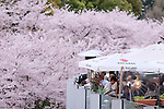 People eat at a restaurant as cherry blossoms are in full bloom in Tokyo, Japan, April 5, 2016.  (Photo by Yuriko Nakao/AFLO)