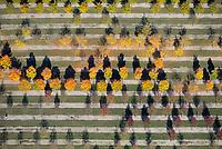 Baumschule: EUROPA, DEUTSCHLAND, NIESDERSACHSEN, BECKEDORF, (EUROPE, GERMANY), 13.10.2018: Europa, Deutschland, Niedersachsen, Beckedorf,  Nordheide, Baumschule, Baum, Baeume, bunt, gelb, Herbst, herbstlich, Pflanzen, Zucht, Reihe, Reihen, aufgereiht, aufgereihte, Pflanze, Baumpflanze, Baumpflanzen, Natur, Umwelt, Laub, Laubfall, Farbe, Luftbild, Luftbilder, Luftaufnahme, Luftaufnahmen, Uebersicht, Ueberblick, Vogelperspekte, Ordnung, ordentlich, System, systematisch
