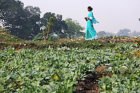 A woman in a turquoise dress walks past fields on the outskirts of Kolkata.<br />