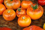 Purple Smudge Tomato