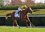 Wise Dan and Jose Lezcano win the Shadwell Turf Mile at Keeneland Racecourse.October 6, 2012.