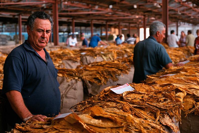 Grower Joe Cosentino viewing sales voucher, Mareeba Sales Floor, Mareeba, 2002.
