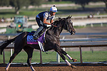 OCT 29 2014:Tammy the Torpedo, trained by Chad Brown, exercises in preparation for the Breeders' Cup Juvenile Fillies Turf at Santa Anita Race Course in Arcadia, California on October 29, 2014. Kazushi Ishida/ESW/CSM