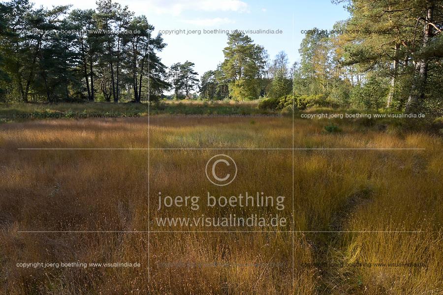GERMANY, lower saxonia, heath moor and forest / DEUTSCHLAND, Niedersachsen, Lüneburger Heide, Wald und Moor, Ottermoor, Torf mit Gras Weißes Schnabelreet