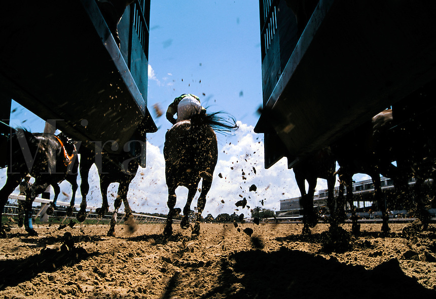 Dirt flies as thoroughbred race horses break from the starting gate, viewed at hoof level from behind the gate.