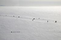 Eric Rogers runs along the Bering Sea coast near Moses Point between Koyuk and Ellim during Iditarod 2008