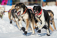 Kristie Bertington leaders run the corner at Cordova Street and 4th avenue during the 2019 ceremonial start of the Iditarod in downtown Anchorage, Alaska on Saturday March 2.<br /> <br /> Photo by Jeff Schultz/  (C) 2019  ALL RIGHTS RESERVED