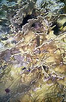 Abstract view of coral and sea urchins<br />