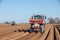 Potato planting - Lincolnshire, March